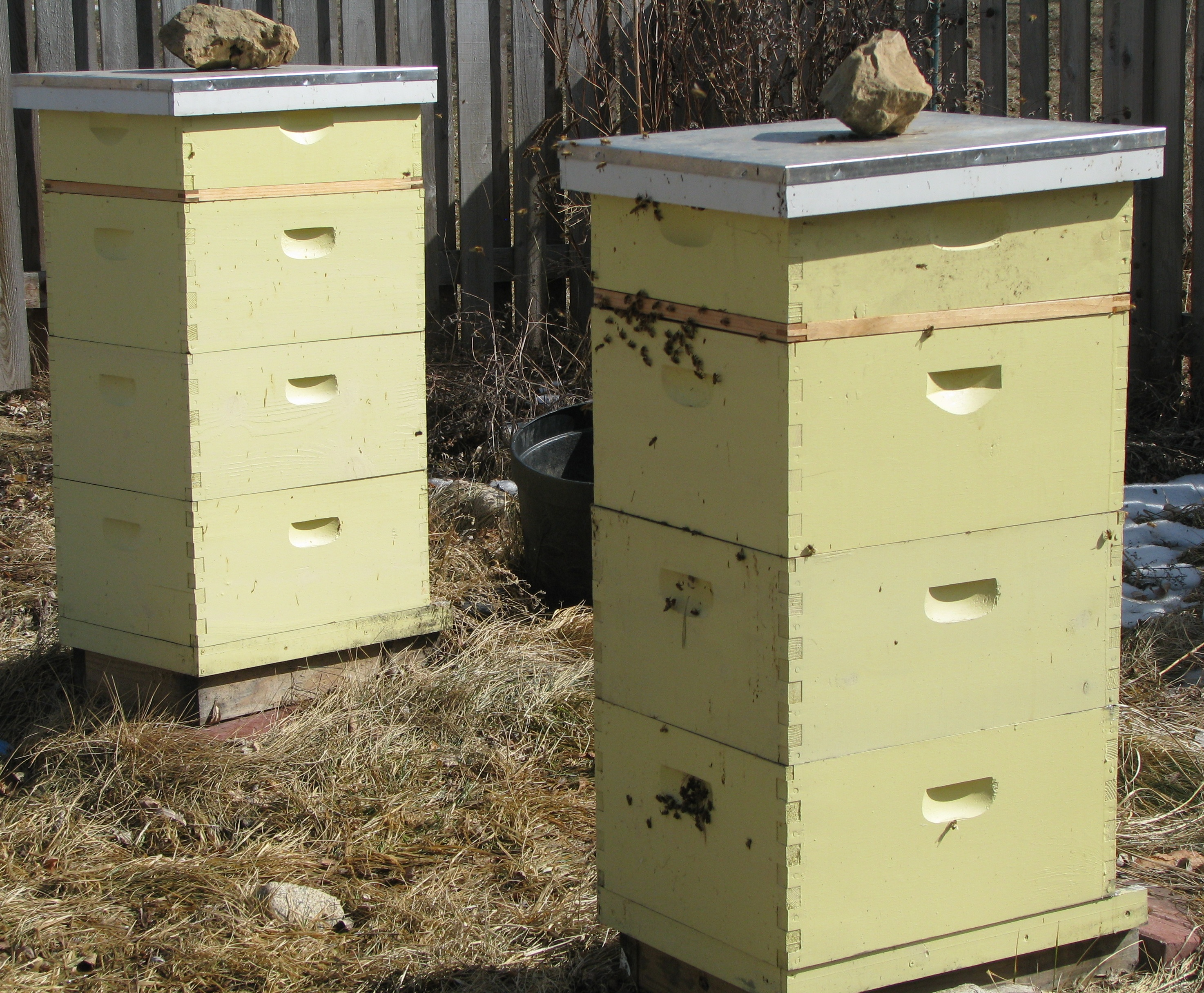 flow hive avis amazing rooftop beehives with flow hive avis interesting honey flowing inside a. Black Bedroom Furniture Sets. Home Design Ideas